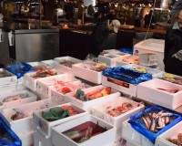 足立市場|一般客でも買い物しやすい鮮魚の穴場!